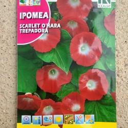 """Semillas IPOMOEA """"Scarlet..."""