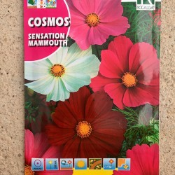 "Semillas COSMOS ""SENSATION..."