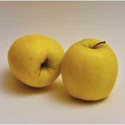 Manzano GOLDEN raiz protegida