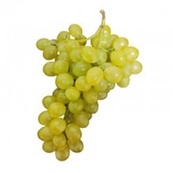 """Parra uva de mesa """"Aledo""""..."""