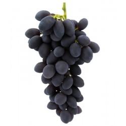 """Parra uva de mesa """"Autumn..."""