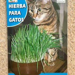 Semillas hierba para gatos